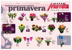 Catálogo Super Muffato (  6 dias mais)