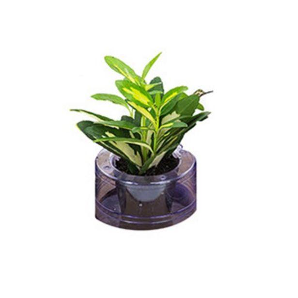 Oferta de Flor Hidrocultura Variado P05 Planta Ornamental por R$6,29