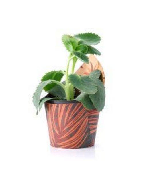 Oferta de Planta Mini Suculenta Pote 09 1 Unidade por R$4,94