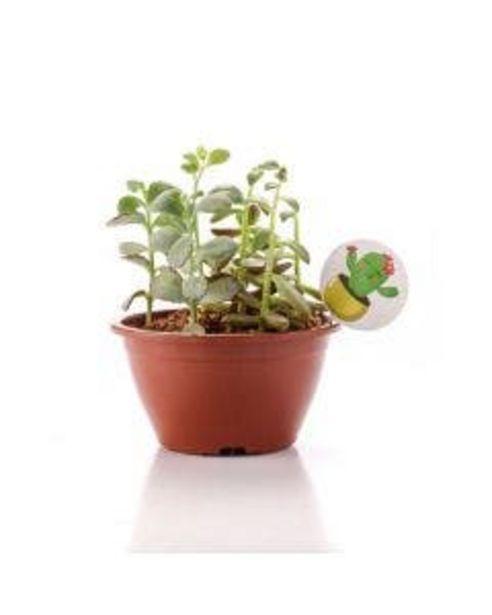 Oferta de Planta Suculenta Mix Cuia 13 por R$19,9