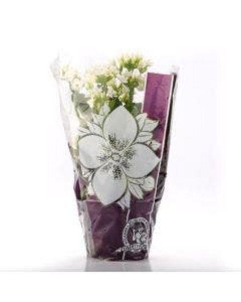 Oferta de Flor Kalanchoe Pote 11 por R$5,99