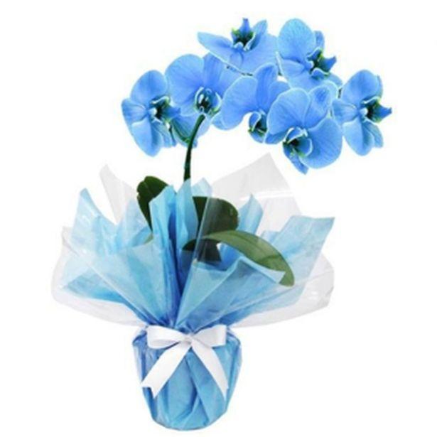 Oferta de Orquidea Phalaenopsis P12 Azul por R$119